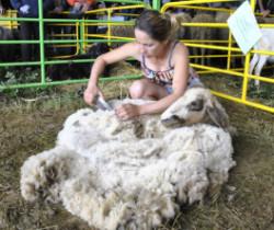 Корица Състезание за стригане на овце 2013