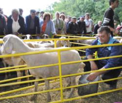 Корица от Доене на овце 2013