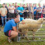 Доене на овце 2017
