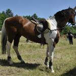 Изложители на коне 2013