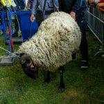 151-килограмовият джеки спечели състезанието за най-тежък коч